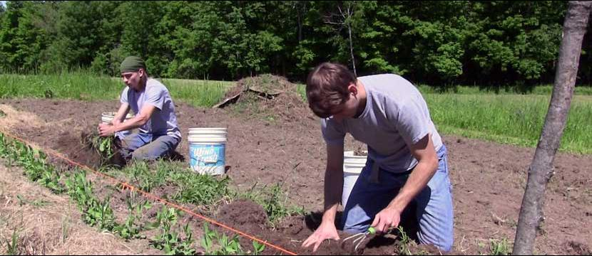 Austin and Ryan preparing the soil for planting