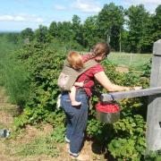 Collecting Raspberries