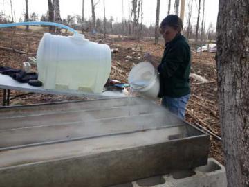 Kayla pouring sap